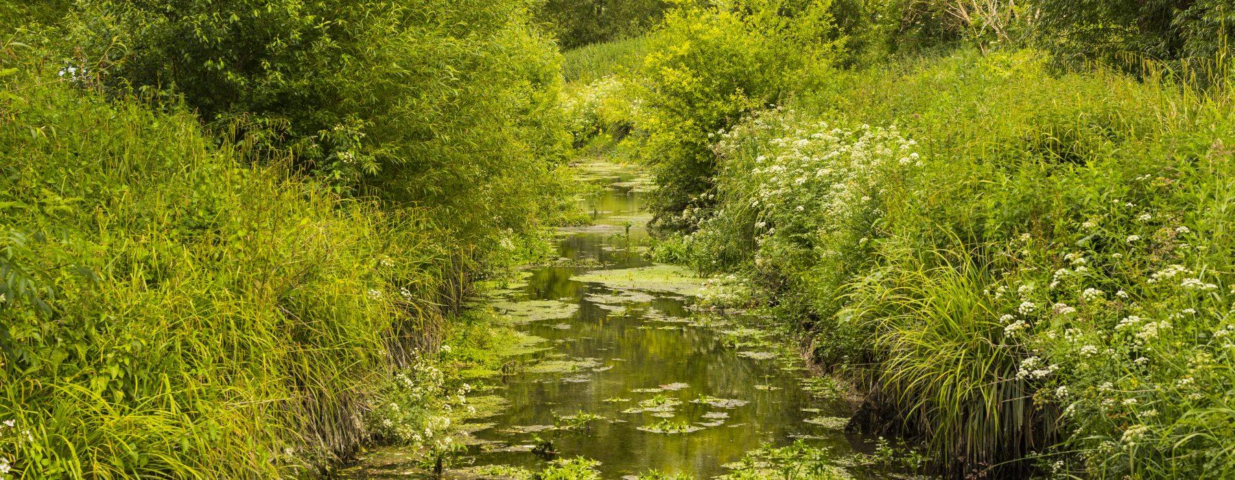 Creek on the Railway Land Wildlife Trust